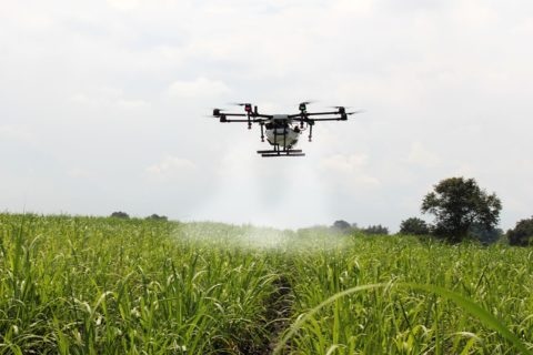 http://www.houzen.com.br/blog/wp-content/uploads/2018/02/spraying-sugar-cane-2746350_1280-e1519236876457.jpg
